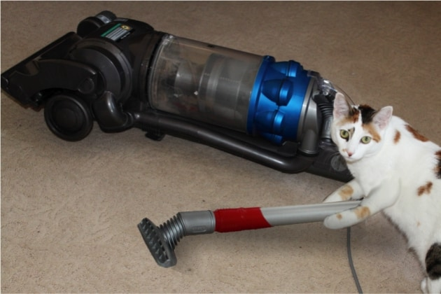 Cat Forced to Vacuum Up Its Own Fur