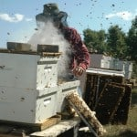 FBI Nabs Bees for Honey Mastermind
