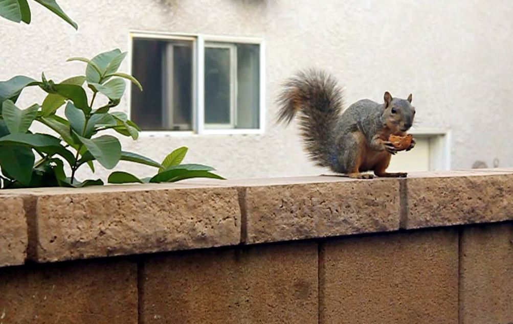 Fugitive Squirrel