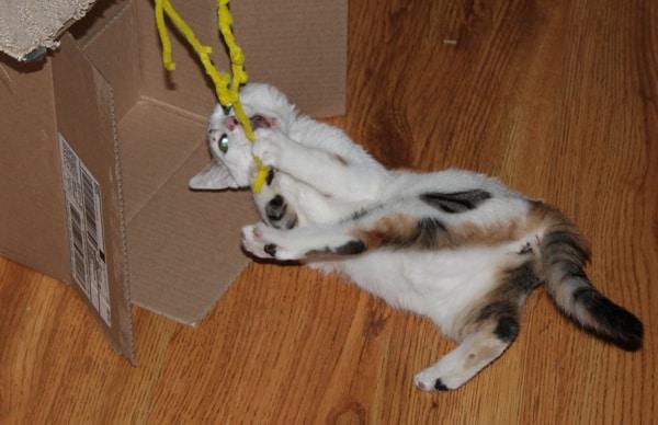 Cat No Longer Mammal