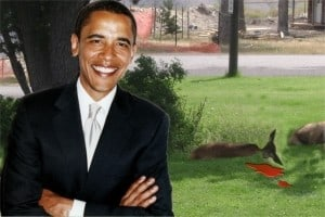Elk Downed by President
