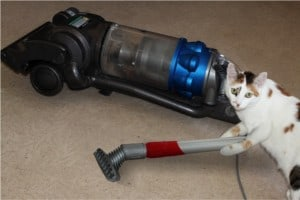 Image result for cat vacuum