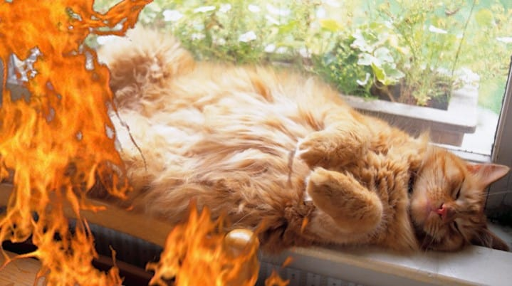 Cat Meows During Fire