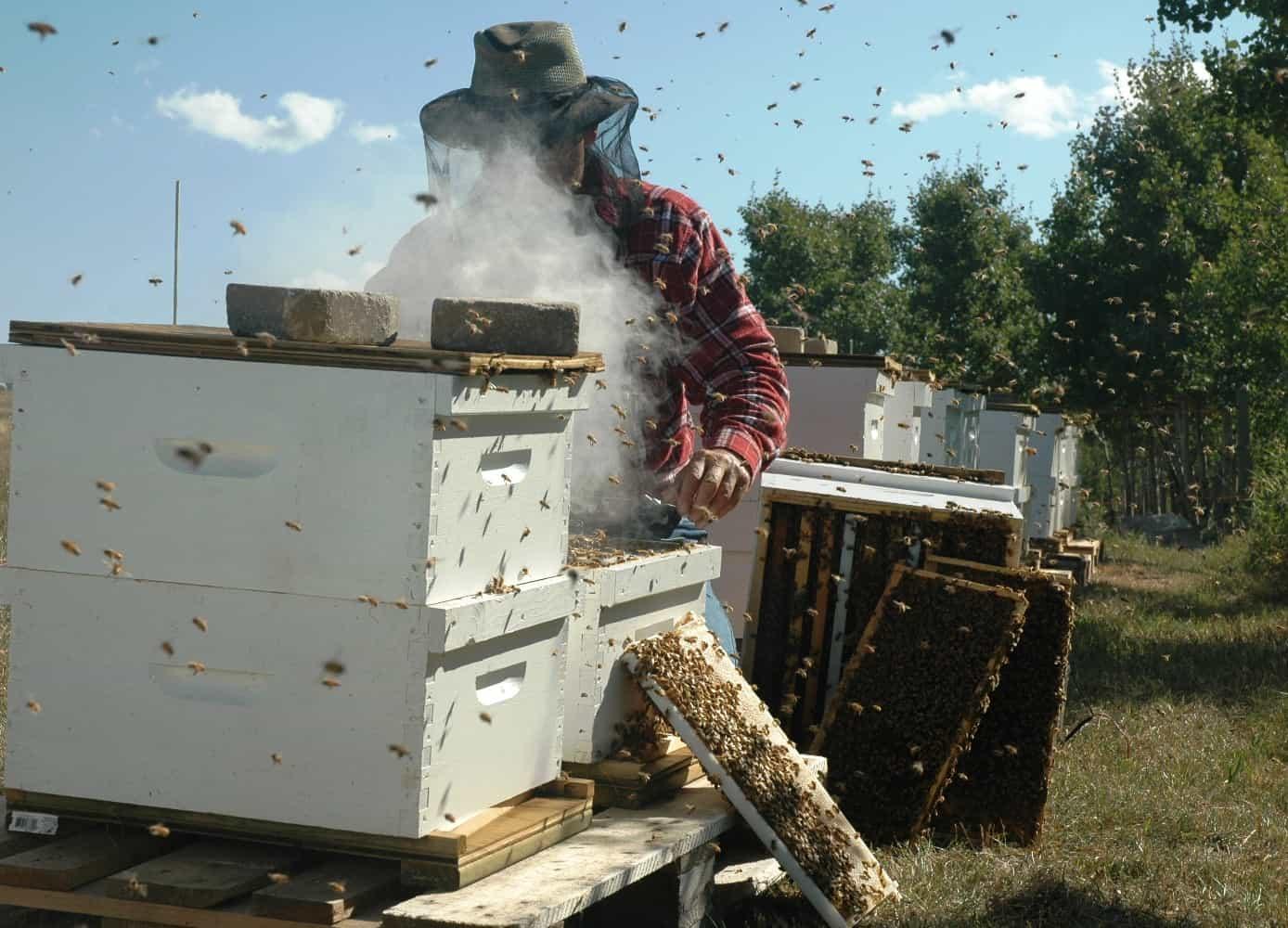FBI Nabs Bees for Honey Mastermind